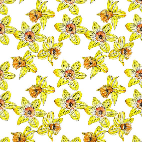 Daffodils (c) Ella Johnston