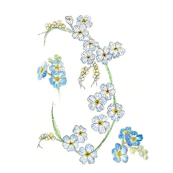 Forget Me Nots by Ella Johnston