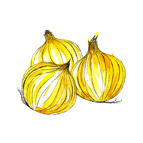 Onions (c) Ella Johnston