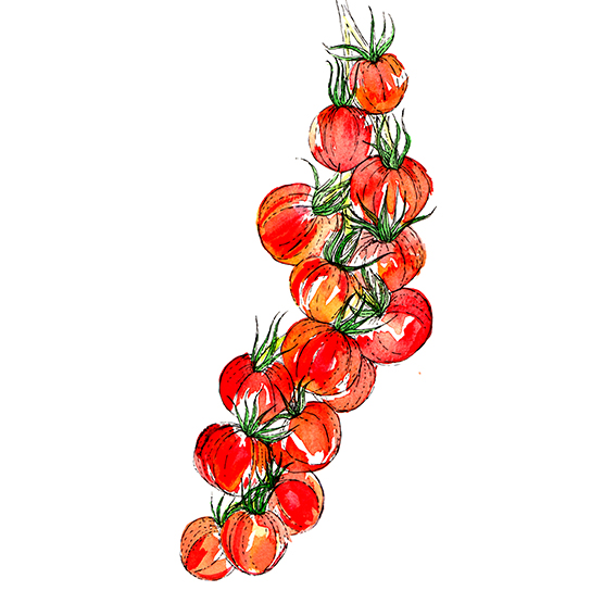 Vine Tomatoes (c) Ella Johnston