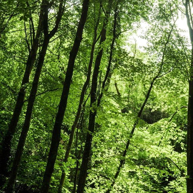 Brixham Grove trees GREEN LO RES
