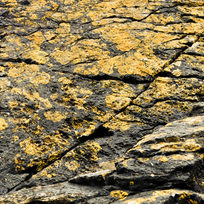 Brixham lichen 2 YELLOW LO RES