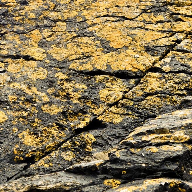 Brixham lichen 2 YELLOW LO RES