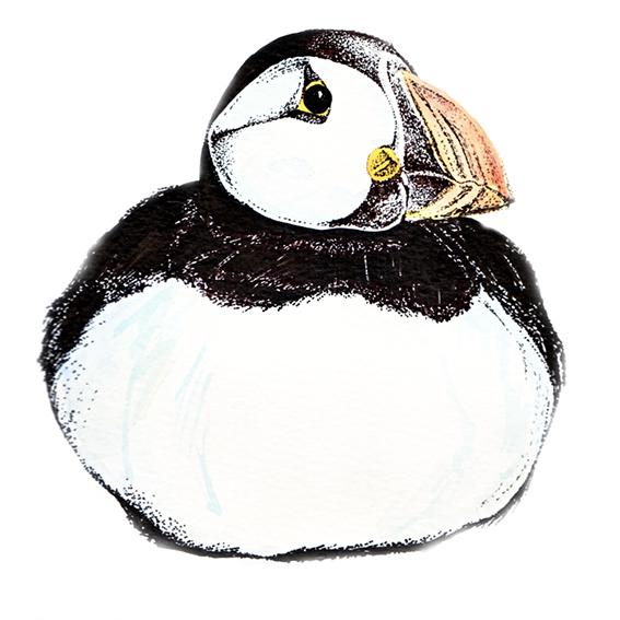 Puffin illustration (c) Ella Johnston