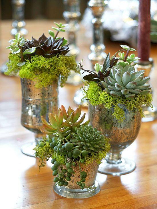 #Succulent plants #vintage at http://www.ellasplace.me via http://www.bhg.com
