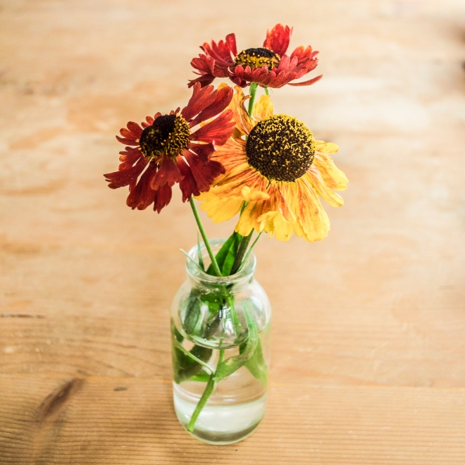 Heleniums from our garden. http://www.ellasplace.me ©Ella Johnston.