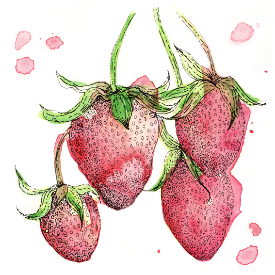 Strawberries illustration (c) Ella Johnston