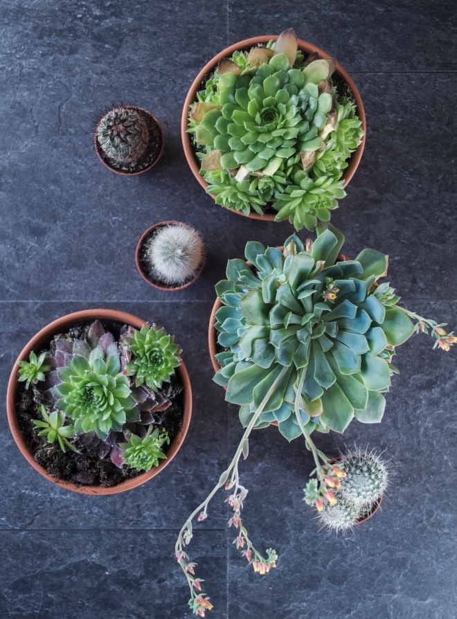 #Succulent plants pictured at http://www.ellasplace.me