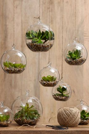 #Succulents #terrariums at http://www.ellasplace.me via  http://www.homelife.com.au