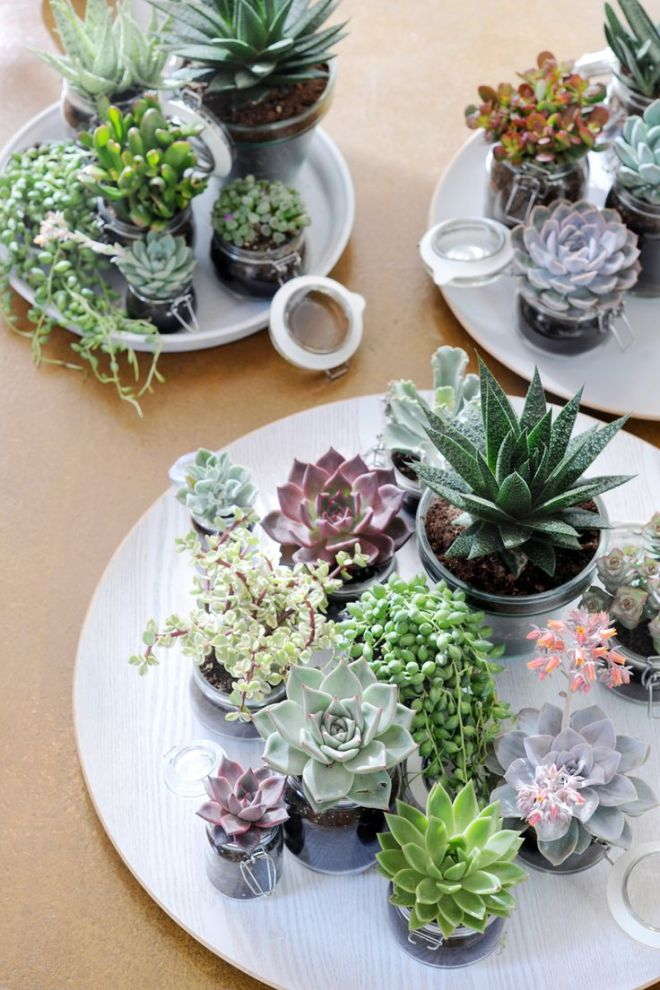 #Succulent plants via theselfsufficientliving.com http://www.ellasplace.me